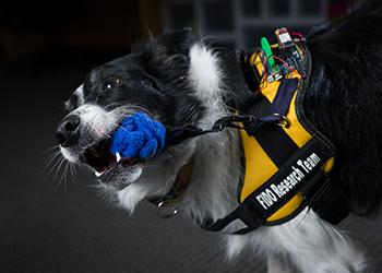 FIDO: El proyecto de Google que permite la comunicación con nuestros perros